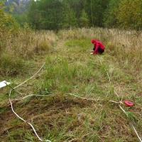 Experimentalní výsevy kokrhele na potlačení třtiny (Kosov)