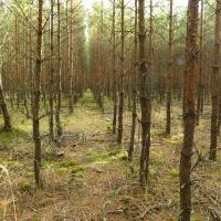 Stráž nad Nežárkou: lesnická rekultivace