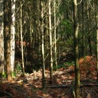 Lesnicky rekultivované rašeliniště